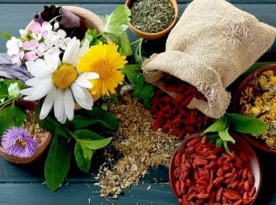 Путешествие в мир лекарственных растений