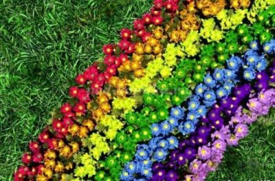 День рождения Феи Цветов